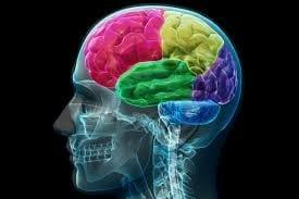 Psychology - Brain Segments